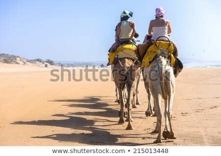 Stock photo: camel on the sea left