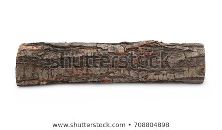 saw cut bark isolated on white background stock photo © utorro