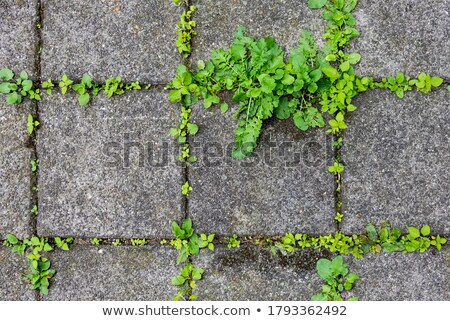 Grouting terraces  Stock photo © smuki