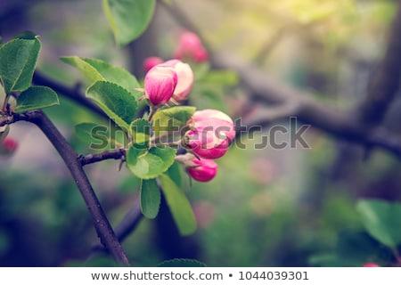 Flor brote hermosa primavera hoja belleza Foto stock © LIstvan