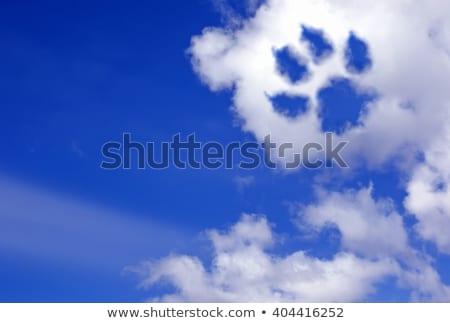 Cennet köpek oynama ayakta büyük Stok fotoğraf © Soleil
