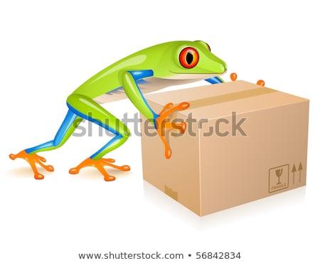 Levering boomkikker weinig groene kikker vervoer Stockfoto © tilo