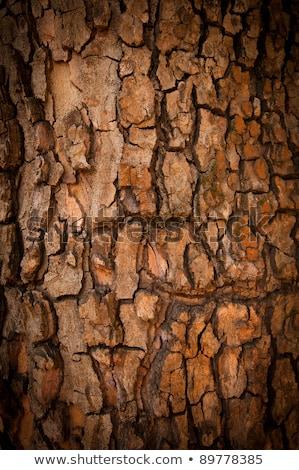 сосна Кора древесины шаблон структуры Сток-фото © olandsfokus