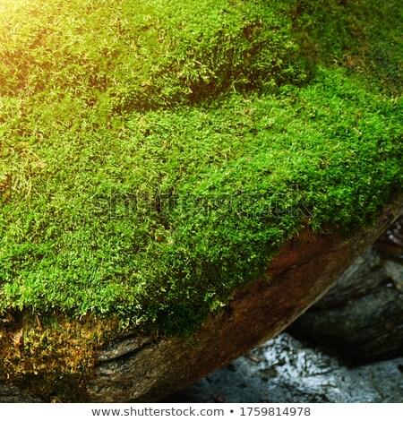 Mossy ground level Stock photo © olandsfokus