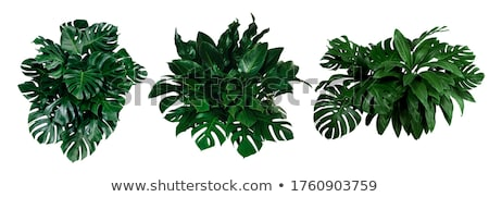 Fern and monstera background Stock photo © gladiolus