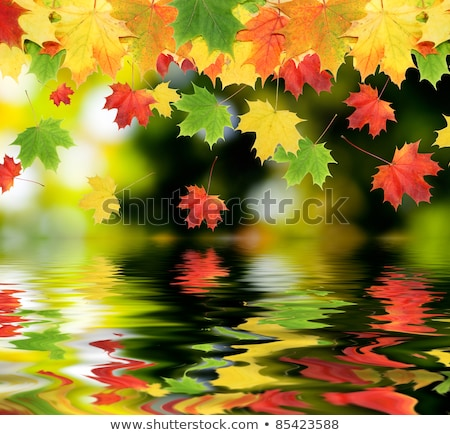 Collage of autumn leaves backgrounds with reflection in water Stock photo © AlisLuch