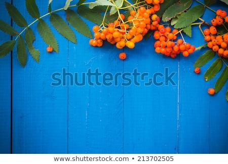 Borstel boom natuur groene vallen mooie Stockfoto © Valeriy