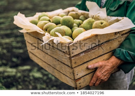 Green ripe pears at the market Stock photo © elxeneize
