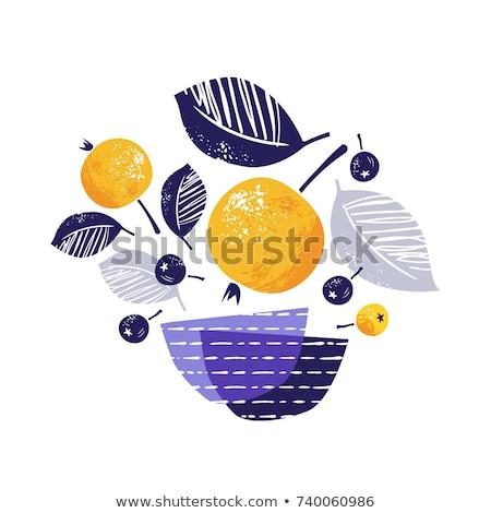 szett · kézzel · rajzolt · körök · vektor · logoterv · elemek - stock fotó © marish