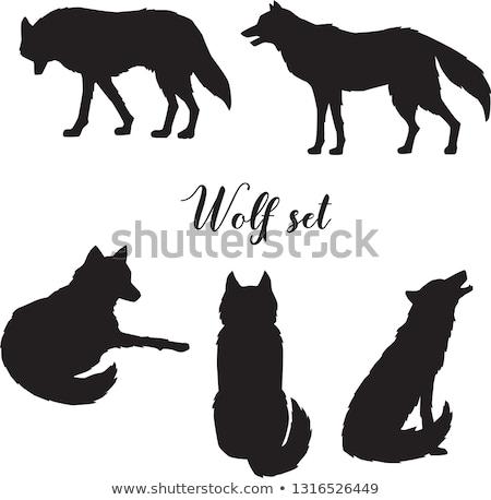 волка · символ · оборотень · знак · лес · хищник - Сток-фото © dashikka