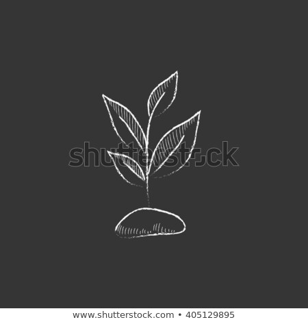 fertilization icon drawn in chalk stock photo © rastudio