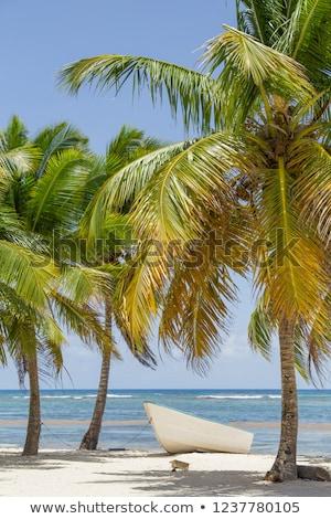 strand · zomer · zand · palmboom · witte · mooie - stockfoto © lunamarina