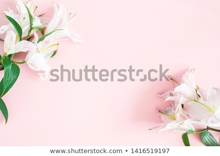 lily flowers border designsummer flowers stock photo © tetkoren