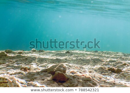 an ecosystem under the pond stock photo © bluering