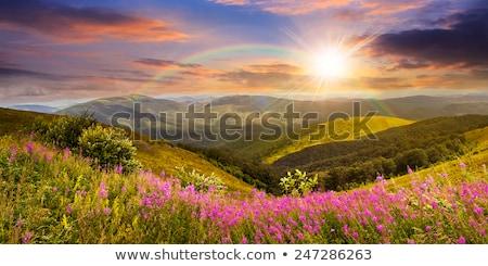 yaz · manzara · dağ · çiçekler · gökkuşağı - stok fotoğraf © kotenko