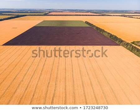 Drone pov of corn maize field Stock photo © stevanovicigor
