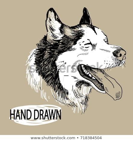 Ayakta hayvanat bahçesi imzalamak örnek köpek doğa Stok fotoğraf © bluering