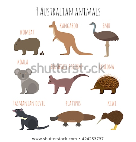 vector flat style set of australian animals stock photo © curiosity