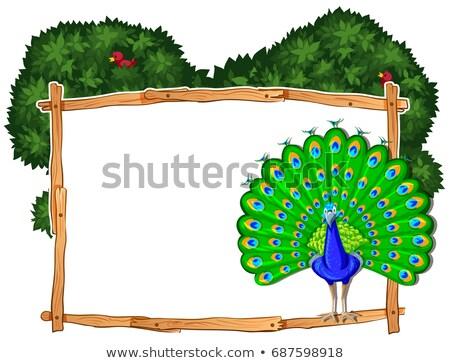 Keret sablon páva bokor illusztráció fa Stock fotó © bluering