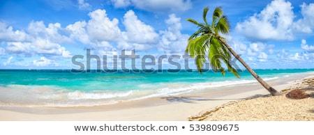 Tropical paradise island sandy beach, palm trees and sea Stock photo © orensila
