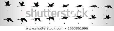Animazione uccello battenti colomba bianco icona Foto d'archivio © Olena