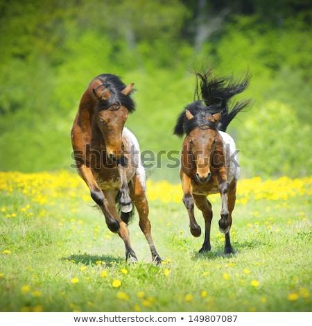 paard · lopen · snel · zonsondergang · licht · oranje - stockfoto © is2