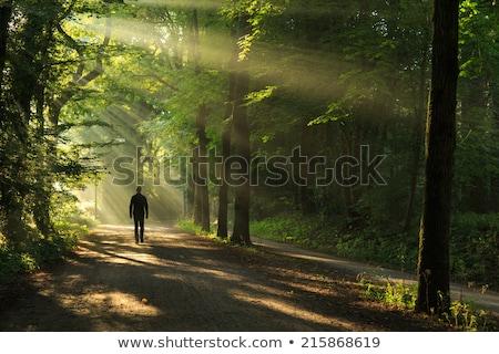 tajemniczy · lasu · przeciwmgielne · drzewo · podświetlenie · piękna - zdjęcia stock © compuinfoto