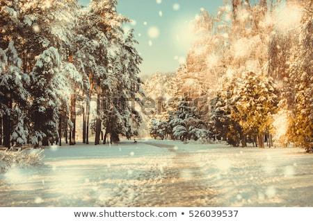 abete · rosso · rami · neve · inverno · albero · coperto - foto d'archivio © juhku