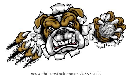 buldogue · design · de · logotipo · 10 · arte · assinar · dentes - foto stock © krisdog