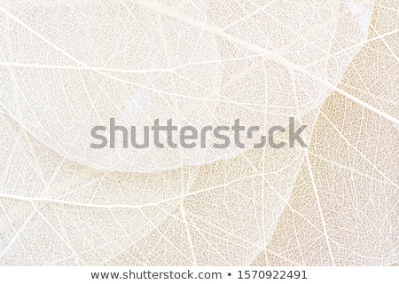 skeleton leaves background stock photo © rufous