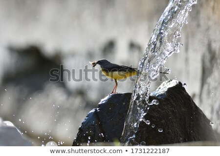 grama · pássaro · preto · branco - foto stock © juhku