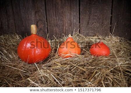Três abóboras feno acima ver Foto stock © dash