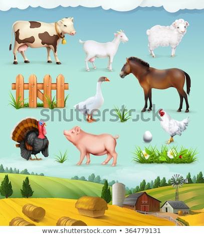 çiftlik çiftlik karikatür örnek renkli Stok fotoğraf © robuart