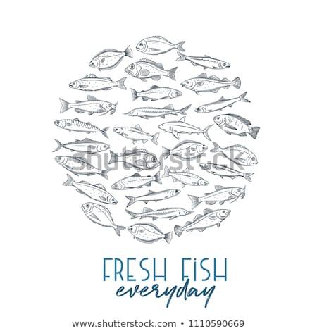 вектора рисованной бас морепродуктов баннер набор Сток-фото © robuart