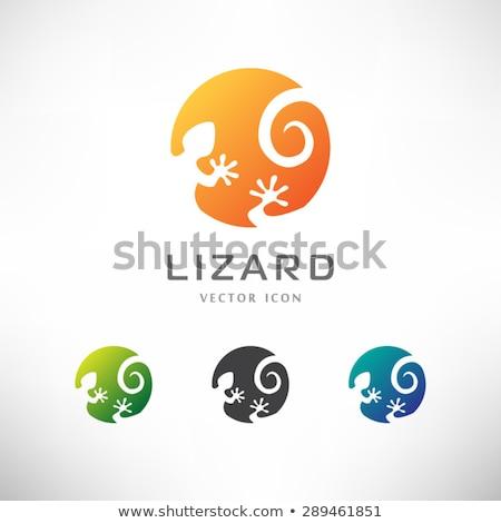 green frog head in water pond icon vector logo Stock photo © blaskorizov