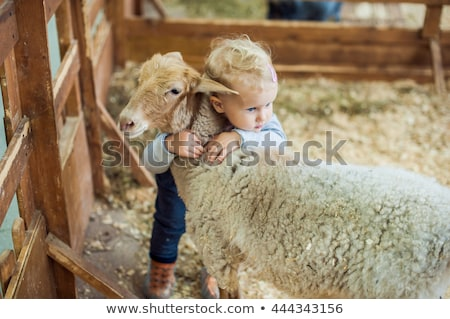 Stock photo: Farm animals playing in the park