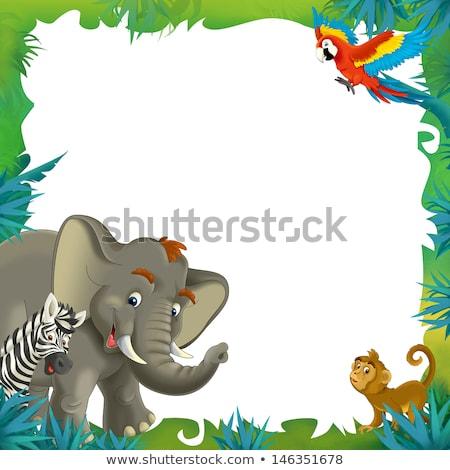 Border template with gorilla in the wild Stock photo © colematt