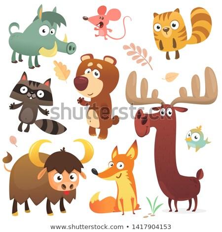 かわいい 動物 ブラウン バイソン 実例 ストックフォト © lenm