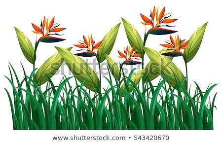 Sok madár édenkert virágok bokor illusztráció Stock fotó © colematt