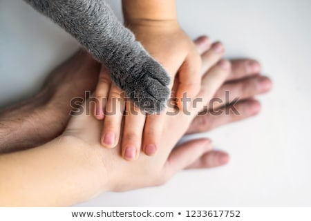 the hands of the family and the furry paw of the cat as a team stock photo © galitskaya