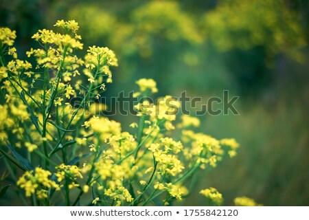 Kwitnienia wcześnie wiosną sezon kwiaty drzew Zdjęcia stock © lovleah