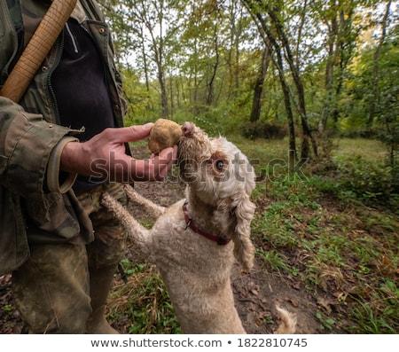 truffles Stock photo © prill