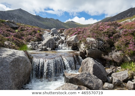 Heather and stream Stock photo © russwitherington