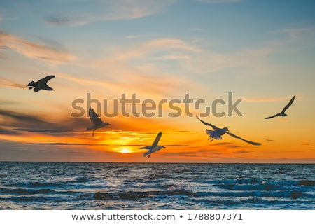 Stock photo: Seagull in the sunset