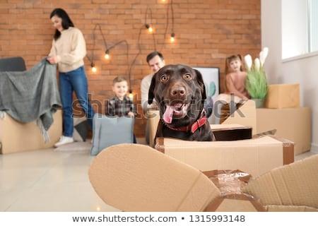 Couple and dog moving house Stock photo © photography33