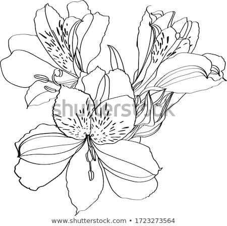Egy virág rózsaszín virág fej cseppek közelkép Stock fotó © zhekos