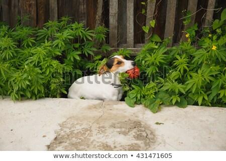 floral · Bush · belle · pourpre · fleurs · résumé - photo stock © pzaxe