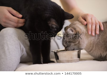 Unrecognizable woman feeding her two cats at home Stock photo © HASLOO