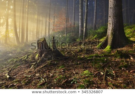 road in deep forest Stock photo © chesterf
