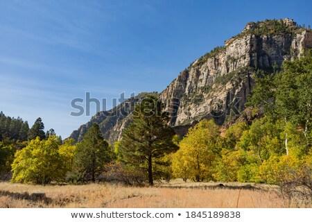 kumtaşı · orman · kayalar · bahçe · manzara - stok fotoğraf © vwalakte